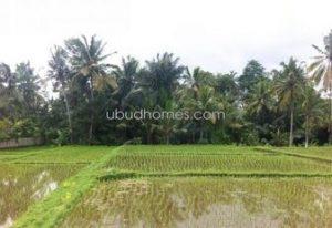 LFS04 - Ubud Homes