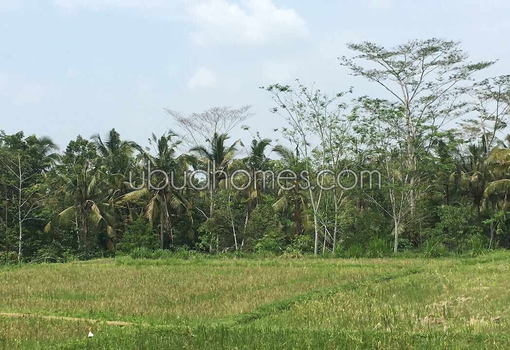 Property LFS14 - Ubud Bali's Premier Resource for Land and Villas