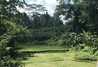 LTL06 - Ubud Homes