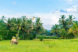 West Ubud - Ubud Homes