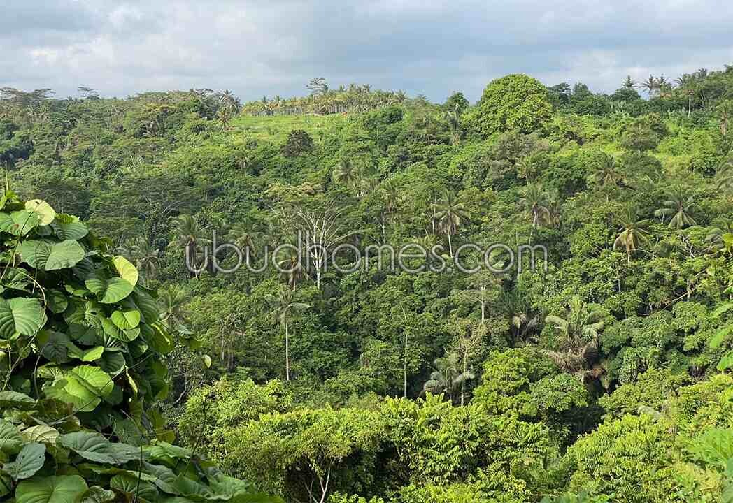 Property LTL16 - Ubud Bali's Premier Resource for Land and Villas